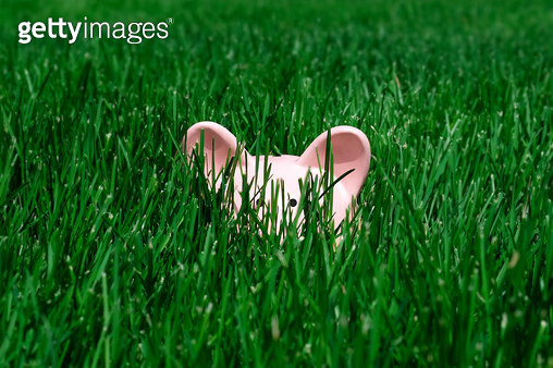 Pink pig coin bank hiding in lush green grass. - gettyimageskorea