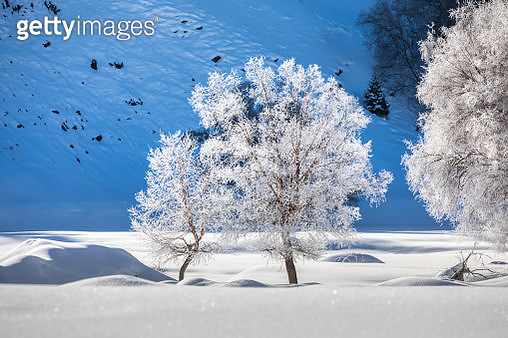 trees with rime ice in winter - gettyimageskorea