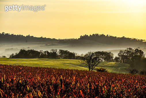 Panoramic image with rural scene in agricultural farms where soy, corn and wheat are cultivated, with the sunset and nature in Brazil. - gettyimageskorea