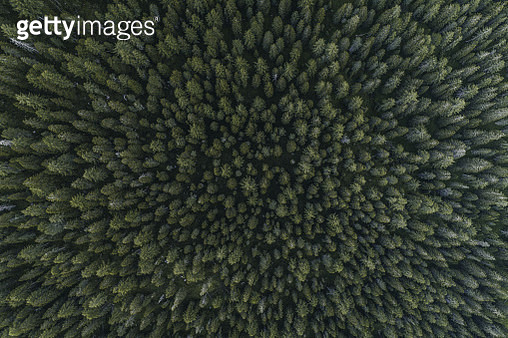Drone shot directly above a forest canopy, Dolomites, Italy - gettyimageskorea