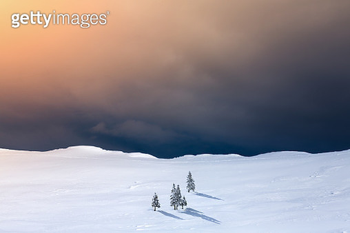 Winter Landscape With Pine Trees - gettyimageskorea