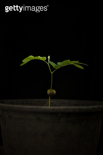 Potted Plant Against Black Background - gettyimageskorea