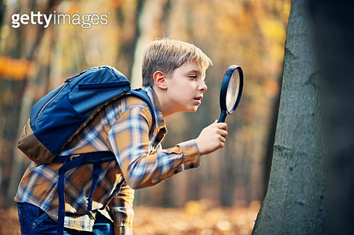 Portrait of a little boy enjoying hiking in autumn forest. The boy is observing ants on the tree. Nikon D850. - gettyimageskorea