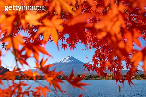 Mount Fuji with Red Maple Leaves in Heart Frame at Kawaguchiko Lake , Autumn Season, Japan - gettyimageskorea
