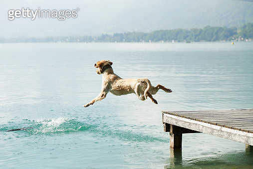 Dog jumping off pier into Lac d'Annecy, Annecy, France - gettyimageskorea