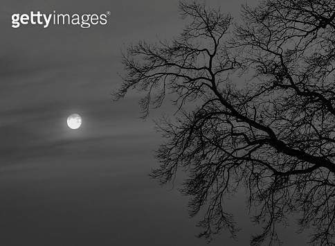 Low Angle View Of Silhouette Bare Tree Against Full Moon At Night - gettyimageskorea