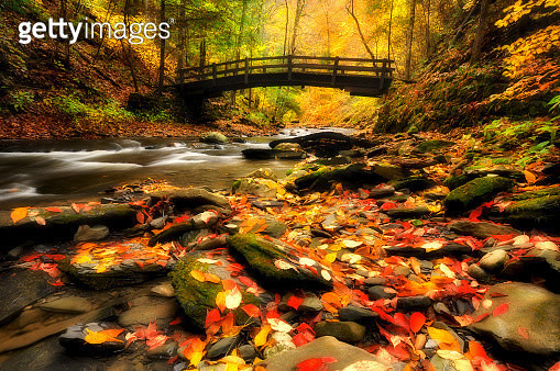 Wooden bridge in Fillmore Glen State Park, Finger Lakes, NY - gettyimageskorea
