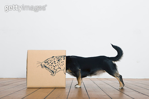 Roaring dog inside a cardboard box painted with a leopard - gettyimageskorea