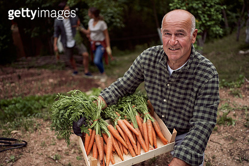 Proud senior farmer holding a full crate with carrots in the back yard - gettyimageskorea