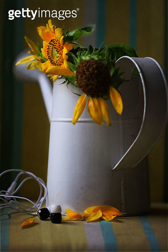 headphones and sunflowers - gettyimageskorea
