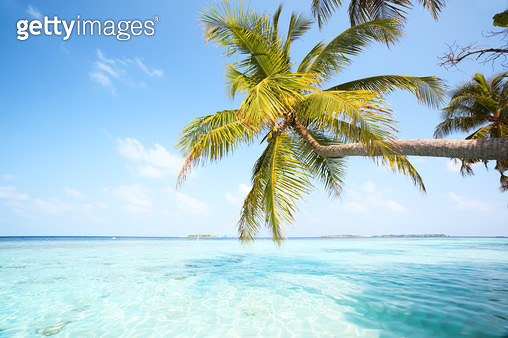 Palm tree leaning over water Maldives - gettyimageskorea
