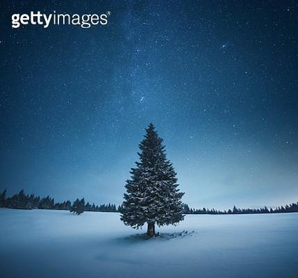 Idyllic Christmas scene: Lone snowcapped fir tree under starry night sky. - gettyimageskorea