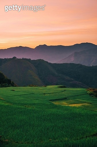 Scenic View Of Rice Field Against Sky During Sunset - gettyimageskorea
