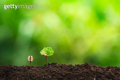 Small Plants Growing On Field - gettyimageskorea