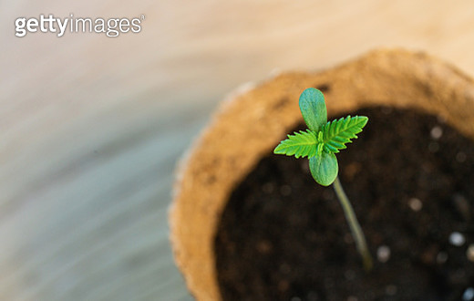 Close-Up Of Small Potted Plant - gettyimageskorea