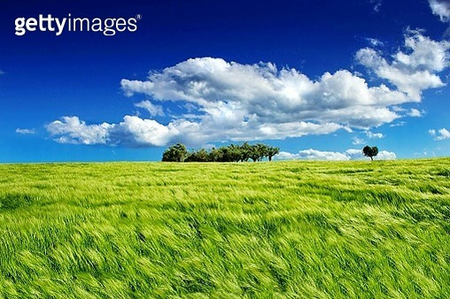 Crop In Field Against Cloudy Sky - gettyimageskorea
