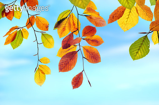 Close up colorful autumn leaves with beautiful sunny background - gettyimageskorea