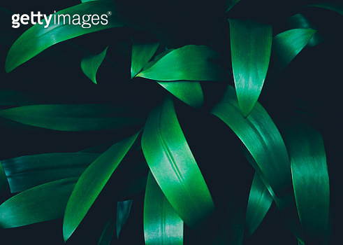Close-Up Of Plant Against Black Background - gettyimageskorea