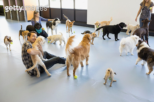 Dog daycare owners playing with dogs - gettyimageskorea