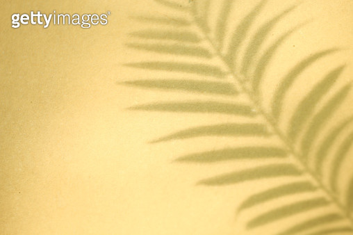 Shadow of palm leaves on yellow background - gettyimageskorea
