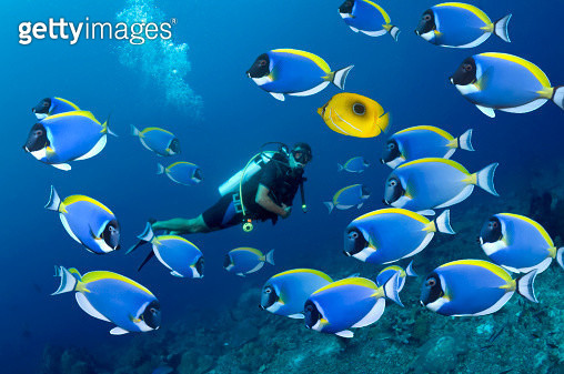 Tropical reef fish with diver - gettyimageskorea