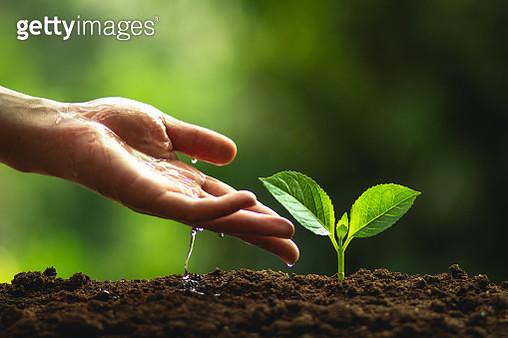 Cropped Hand Planting Seedlings - gettyimageskorea