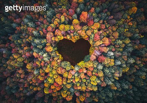 Heart Shape In Autumn Forest - gettyimageskorea