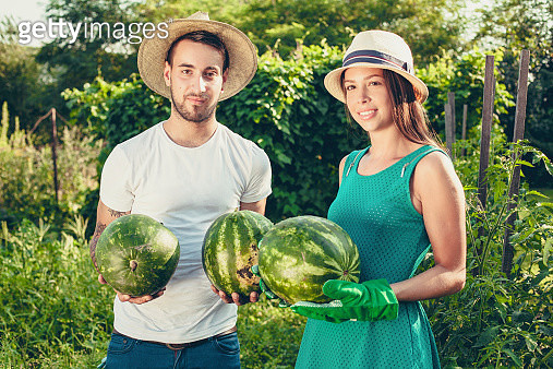 Young couple harvesting watermelons - gettyimageskorea