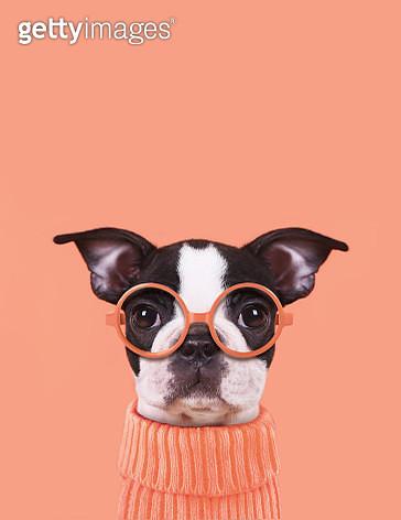 Funny puppy - gettyimageskorea