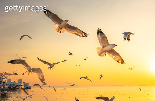 Scenic View of Seagulls Flying on Sea Against Sky During Sunset, Thailand, Asia - gettyimageskorea