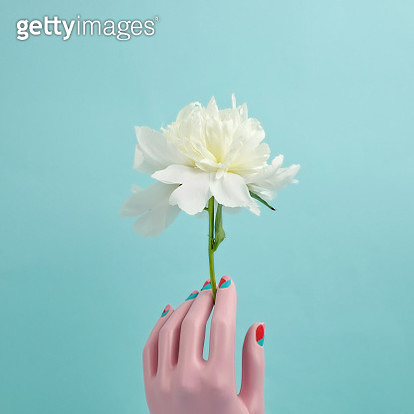 Mannequin hand holding white peony - gettyimageskorea