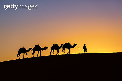 Silhouette of a camel caravan at sunrise in desert Sahara, Morocco - gettyimageskorea