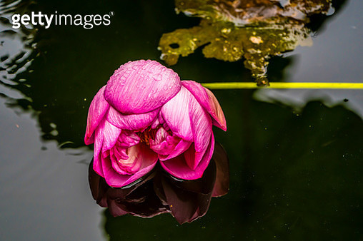 After The Rain - gettyimageskorea