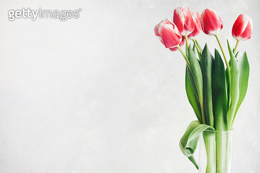 Pink with white tulips on a white background. - gettyimageskorea
