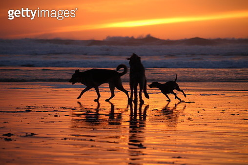 Beautiful winter day on the beach in Cannon Beach, Oregon. - gettyimageskorea