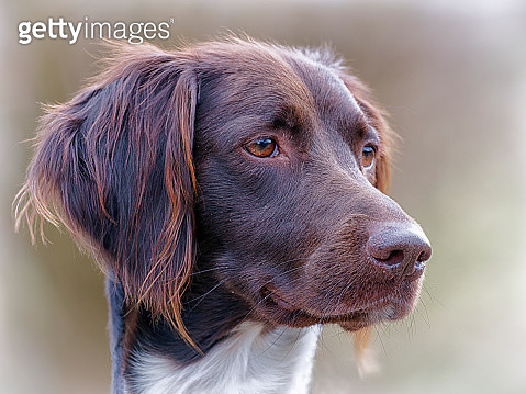 Close-Up Portrait Of A Dog Looking Away - gettyimageskorea