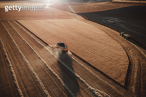 Combine  harvester working at sunset from aerial view. - gettyimageskorea