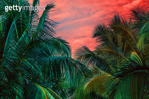 Dreamy palm trees in jungle - gettyimageskorea