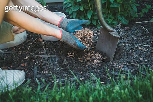 Man putting mulch into a garden - gettyimageskorea