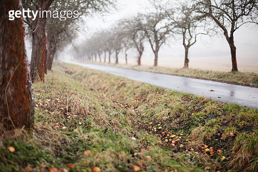 Apple trees lining a road - gettyimageskorea