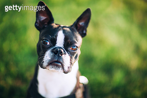 dog looking at camera with trusting expression - gettyimageskorea