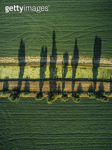 Aerial shot of tree shadows in an agricultural field, Tuscany, Italy - gettyimageskorea