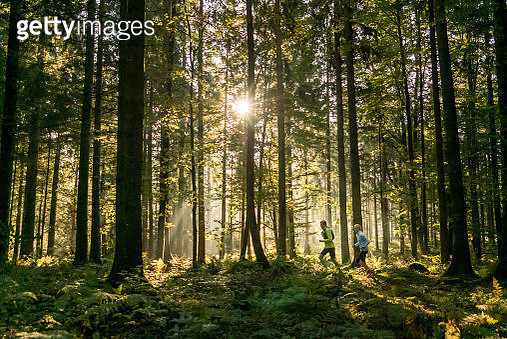The trees are looming above them - gettyimageskorea