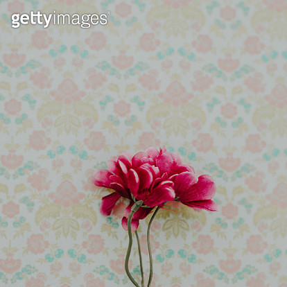 flower flat lay - gettyimageskorea