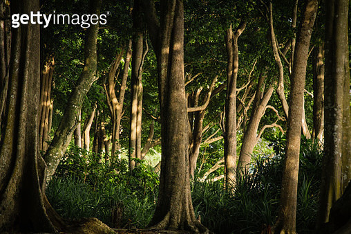 Tropical Forest on Havelock Island, Andaman and Nicobar Islands - gettyimageskorea