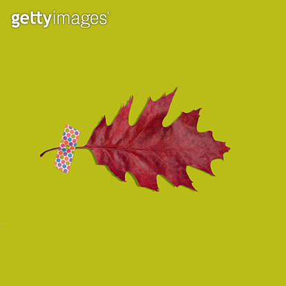 Red fall oak leaf taped to green background with polka dot washi tape - gettyimageskorea