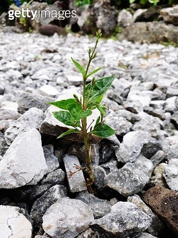 Close-Up Of Small Plant Growing On Rock - gettyimageskorea