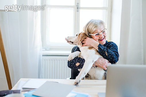 An active senior woman with a dog working in home office, looking at and using laptop. - gettyimageskorea