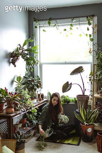Young Adult Woman At Home Watering Indoor House Plants - gettyimageskorea