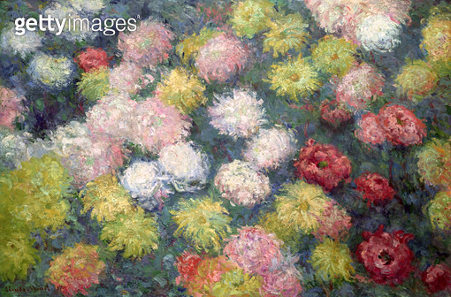 <b>Title</b> : Chrysanthemums, 1897 (oil on canvas)<br><b>Medium</b> : oil on canvas<br><b>Location</b> : Private Collection<br> - gettyimageskorea